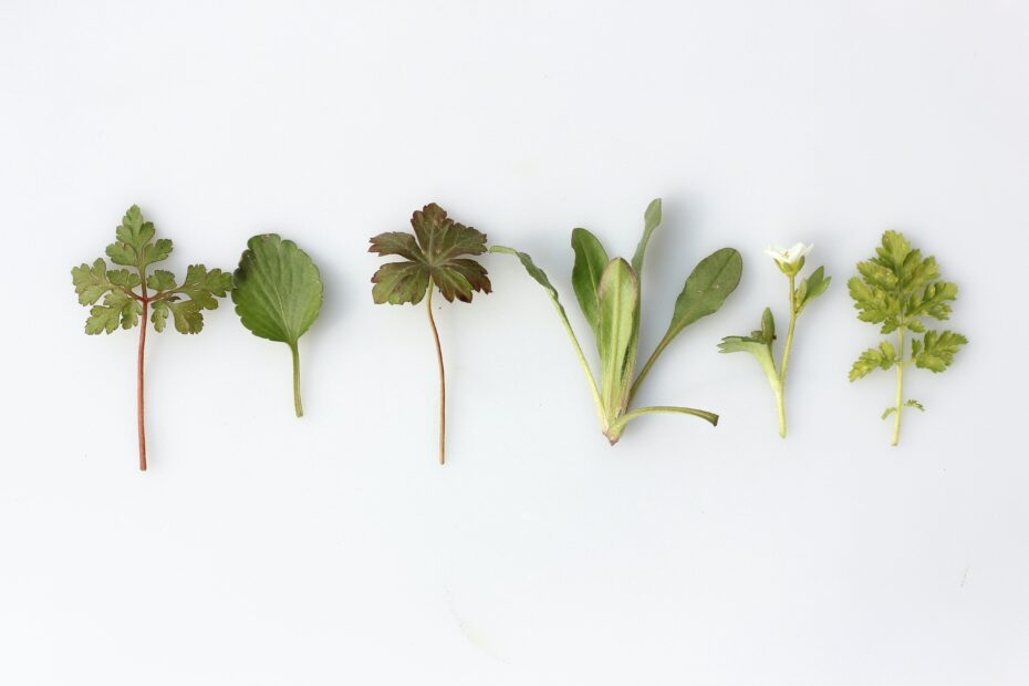row of various herbs