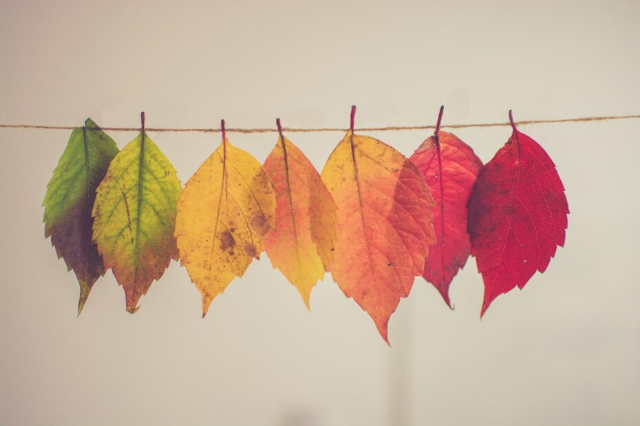 autumn leaves pegged to a line