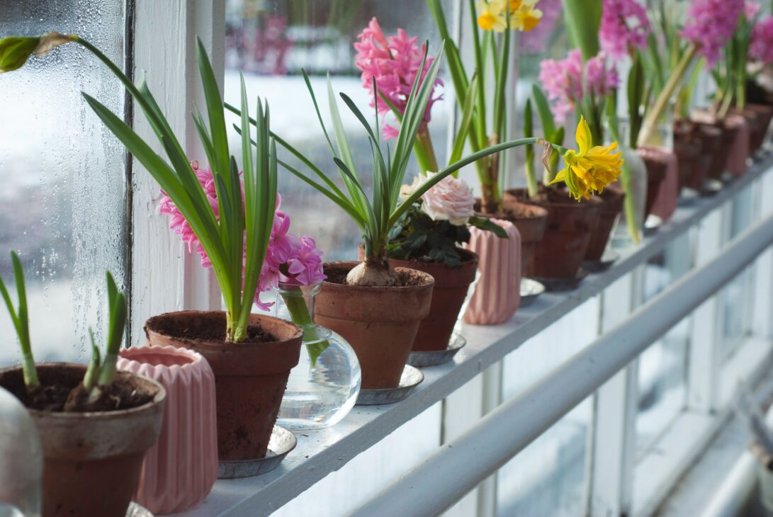 window sill with early plants