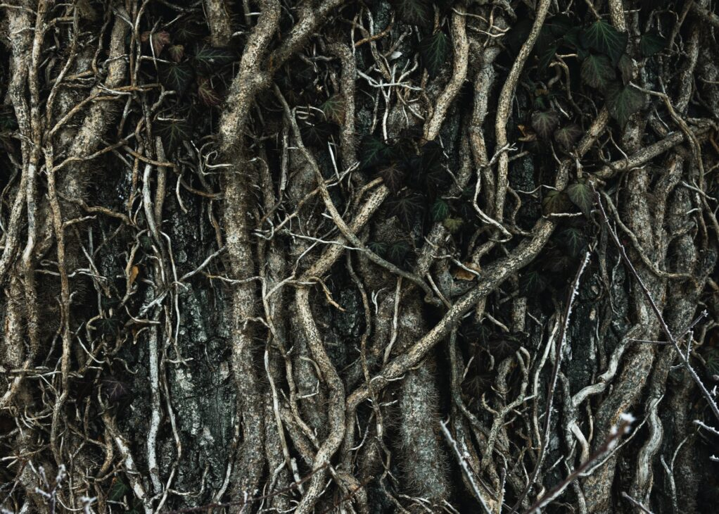 close up of very dense plant roots