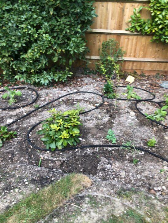 irrigation hoses being installed in garden